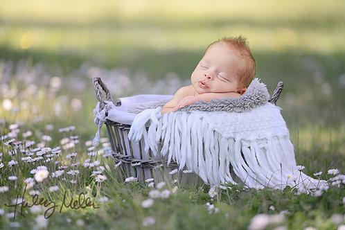 Digital newborn baby backdrop white daisy field basket