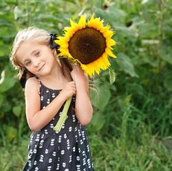 HM Captures sunflower field 8