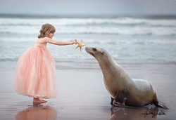 maggie seal web