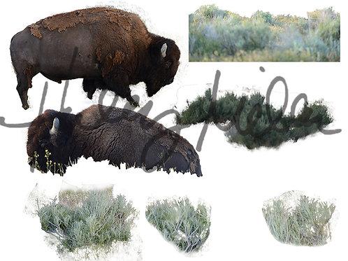 On Sale! Digital Backdrop/Digital Background/Buffalo Overlay/Prop/Transparen