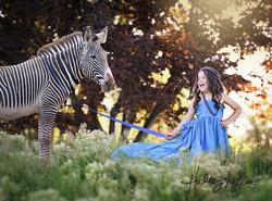 zebra web
