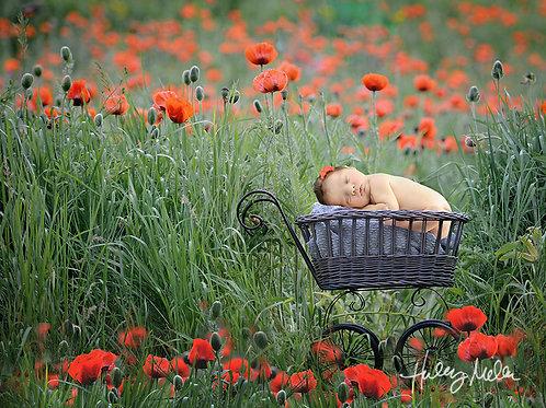 Newborn Digital Backdrop Red Poppy Field Stroller Prop