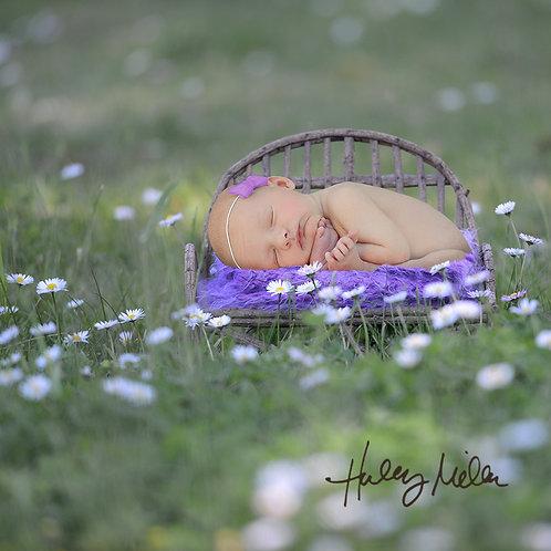 newborn brown wood bench outside purple flowers digital backdrop