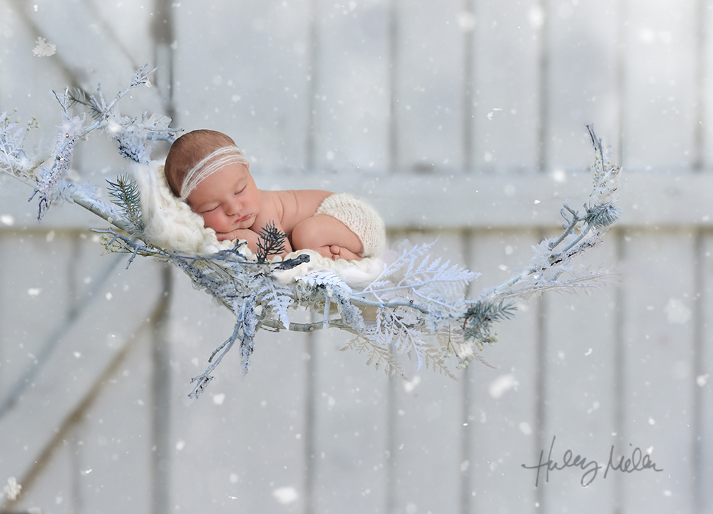 winter branch backdrop 3 baby in web