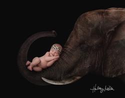 holland elephant web