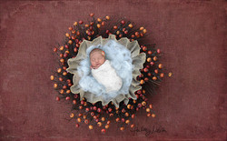 hmcaptures red autumn red berry thanksgiving wreath baby in web