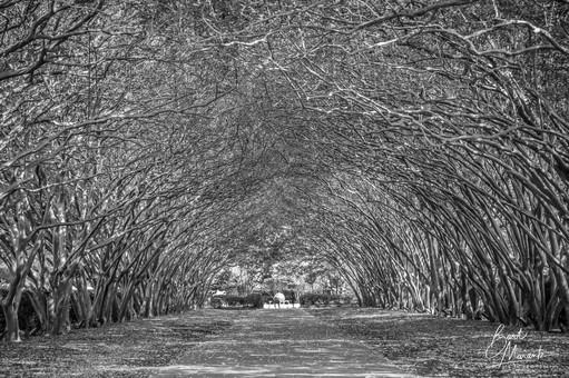 Winters Walking Trees B&W-6519.jpg