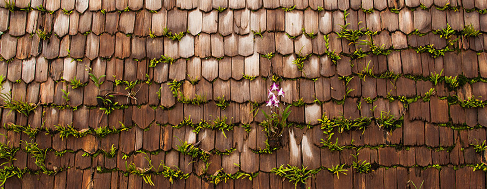 flower-on-roof.jpg