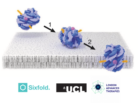 Sixfold Bioscience to collaborate with University College London on advanced therapies project