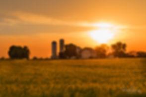 Wheat Fields 1 8x12.jpg