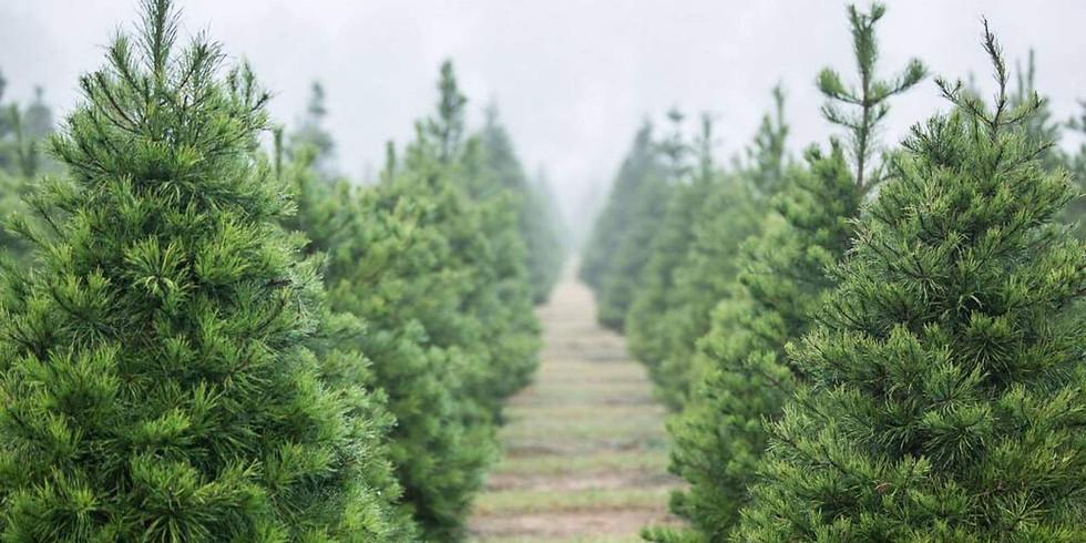 Christmas Tree Mini Photo Session - Nov 14th