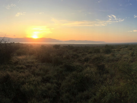 White Elephant Safari Lodge signs with AfriCamps