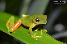 Tinker Reed Frog signed (2).jpg