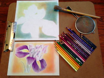Work in Progress - Iris drawings