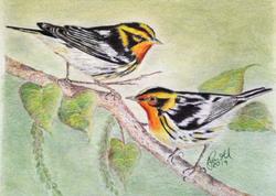 Colorful Warblers