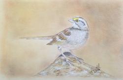 Sparrow on Rock