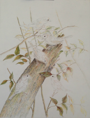 Work in Progress - Five Sparrows