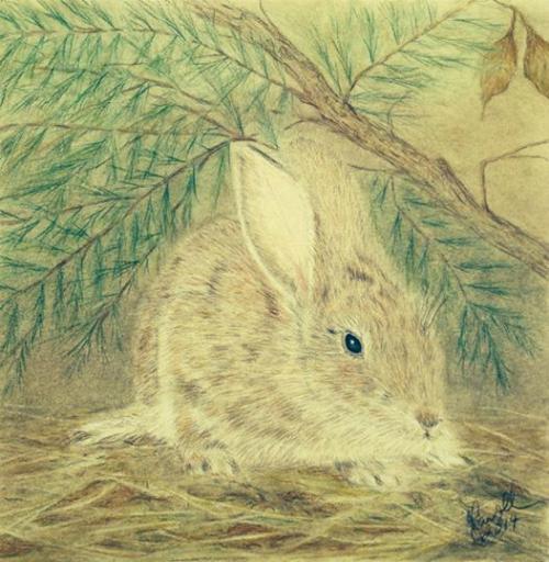 Rabbit in hiding 2.png