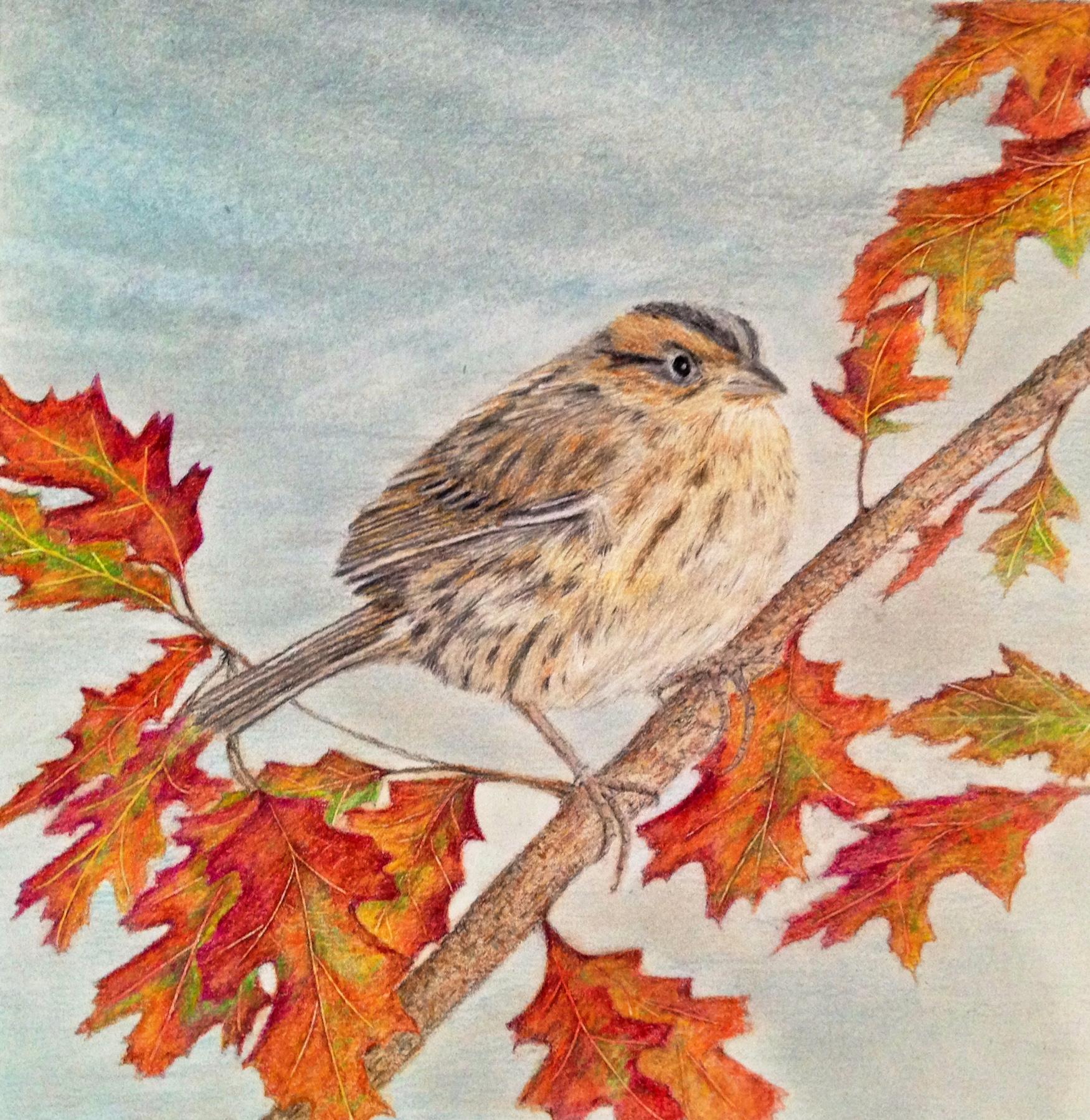 Fall Sparrow