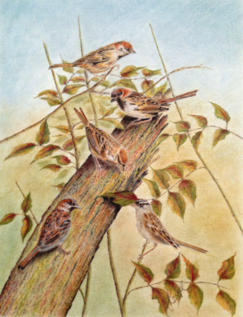 Five Sparrows