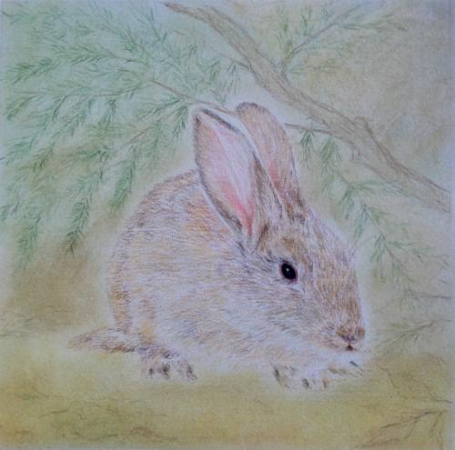 rabbit 2.png