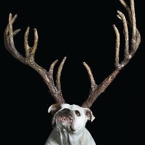 Xmas Antlers.png