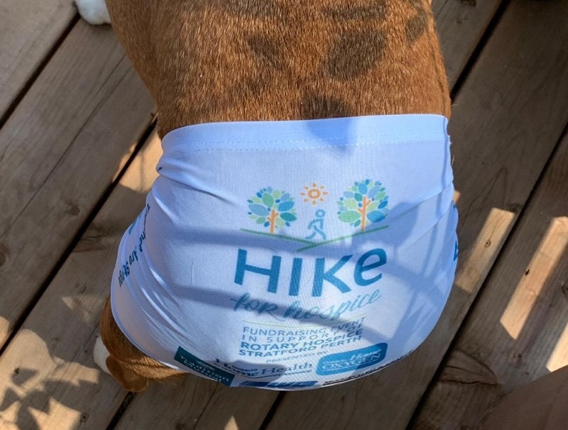 Hiker Dog Dave.jpg