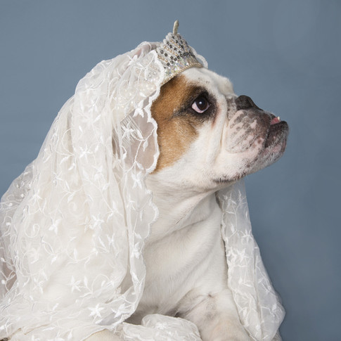 SDJ : BRIDE