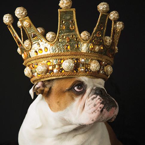 SDJ: KING