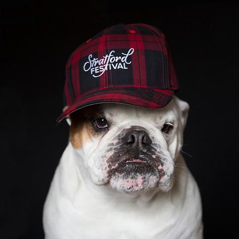 SDJ: SF CAP