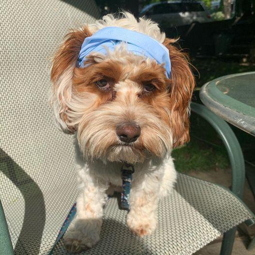 Hiker Dog Poppie w bandana.jpg