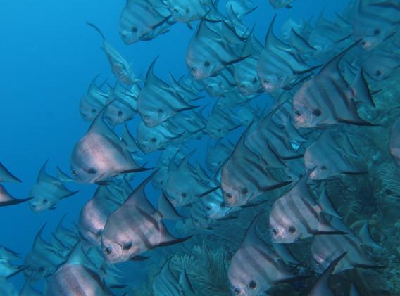 Dive Sites From Atlantis Varadero.jpg