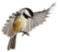 birds_PNG83_edited.png