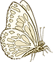 MG_Butterfly_1.png