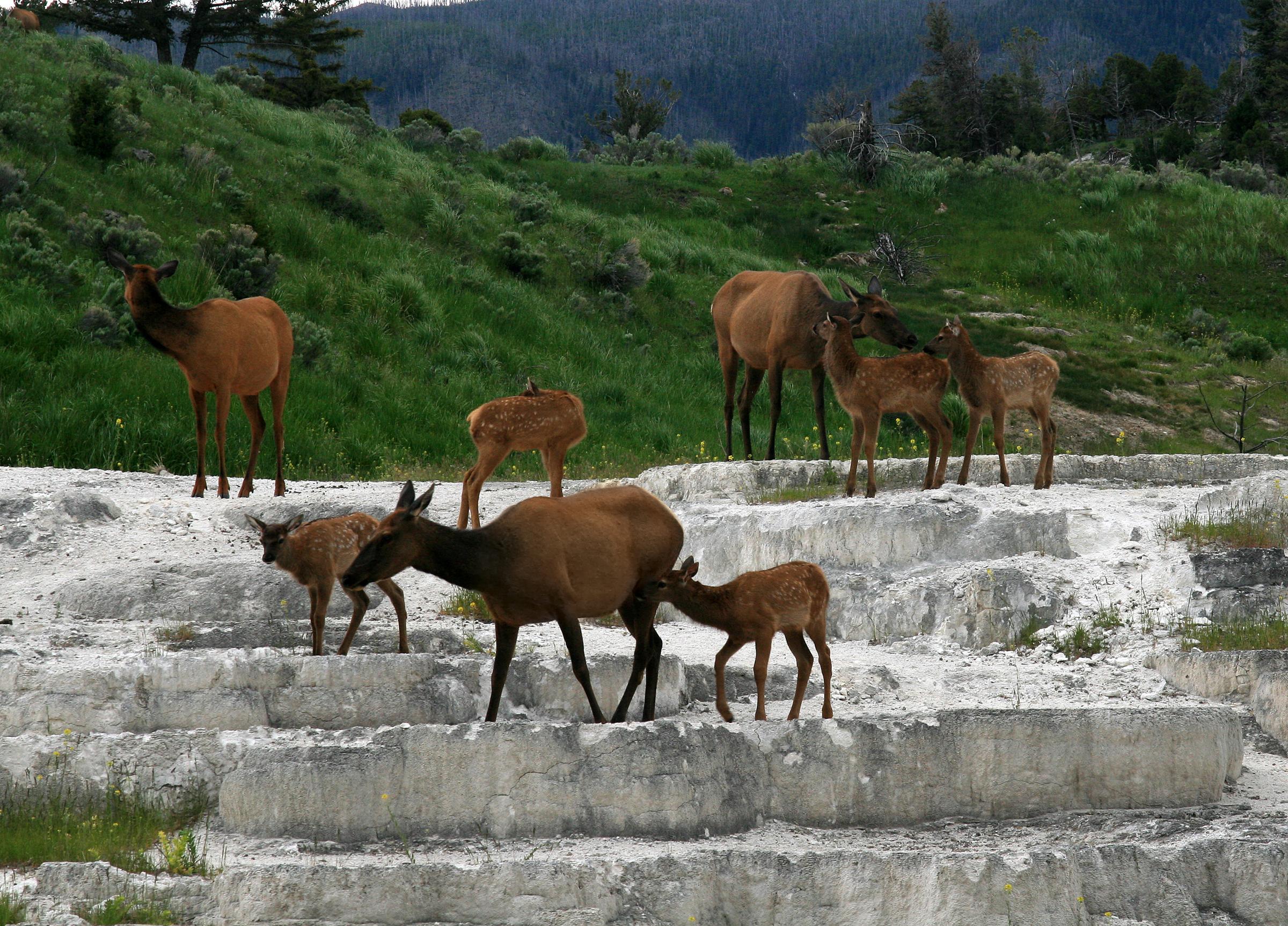 See Lots of Wildlife