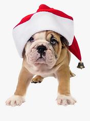 21-217653_clip-art-dog-in-santa-hat-dog-