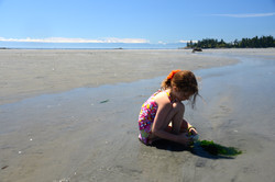 Discover Tidepools
