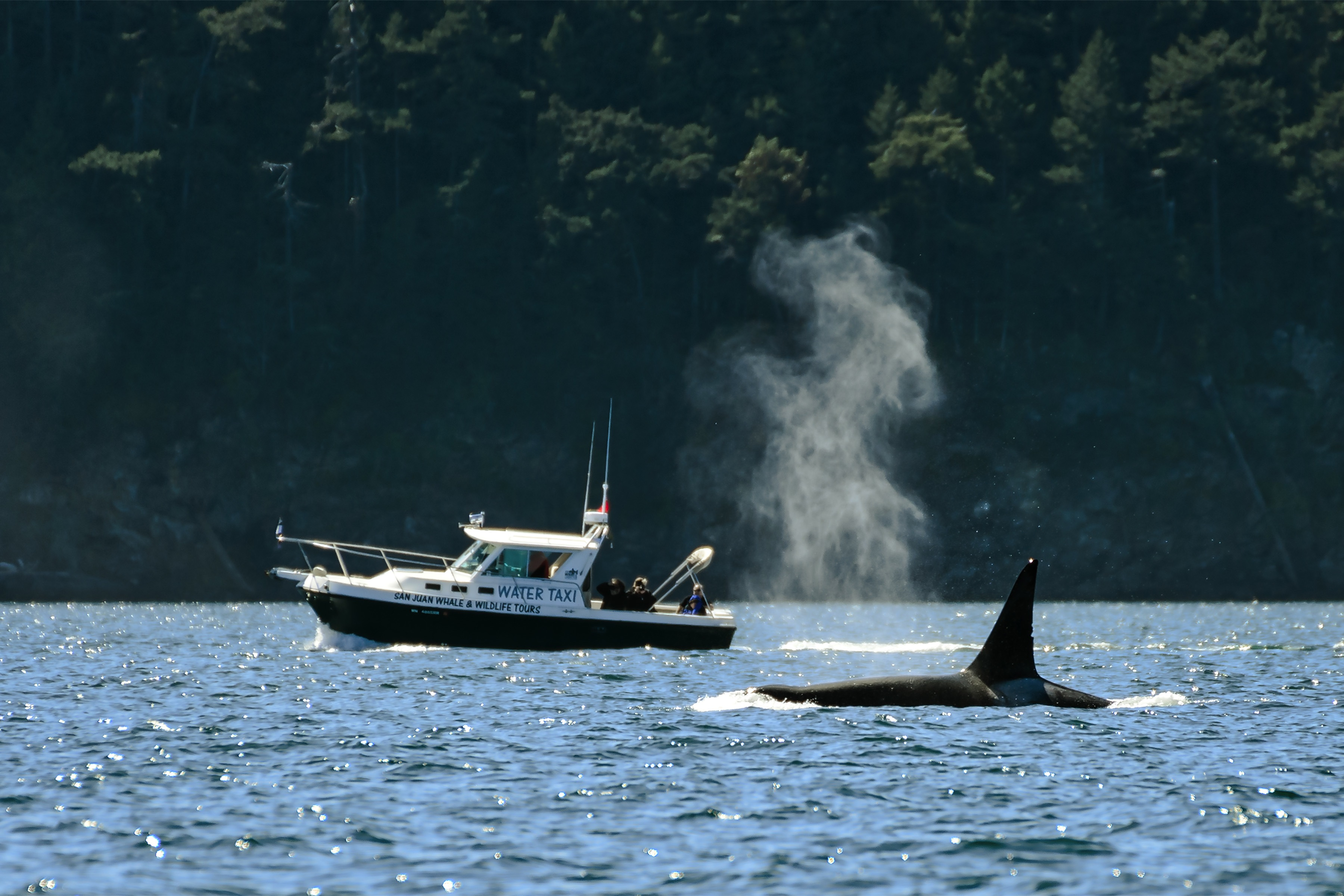 Whale and Wildlife Viewing