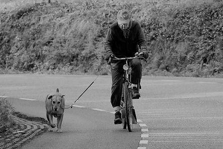 Hond met fietsend baasje