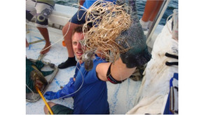 Misperceptions of a giant: impact of the recovering Goliath Grouper on Florida reefs