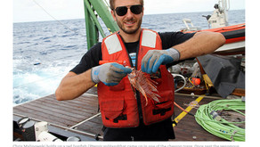 Marine protected area fish research in the Gulf of Mexico