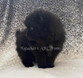 Black puppy watermark_edited.jpg