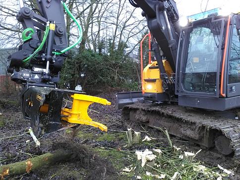 tree-shear.png