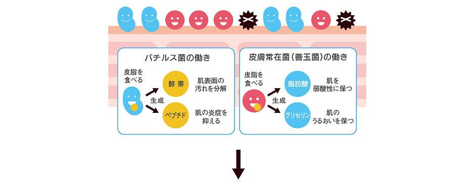 sukoyaka4.jpg