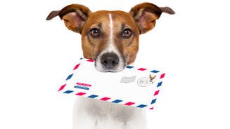 Blackbaud CRM™ Communication Vehicles - Correspondence vs Appeal Mailing vs Marketing Effort