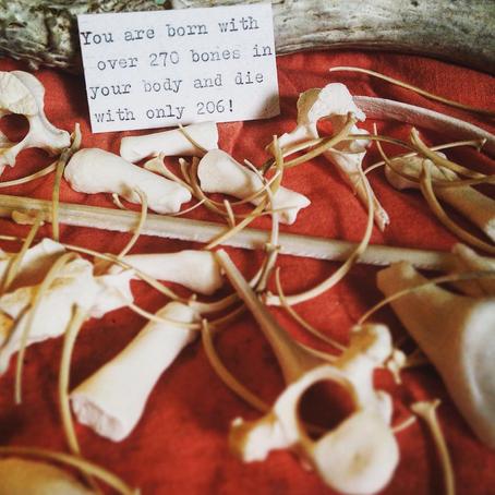 Bones, Bones, Catacombs