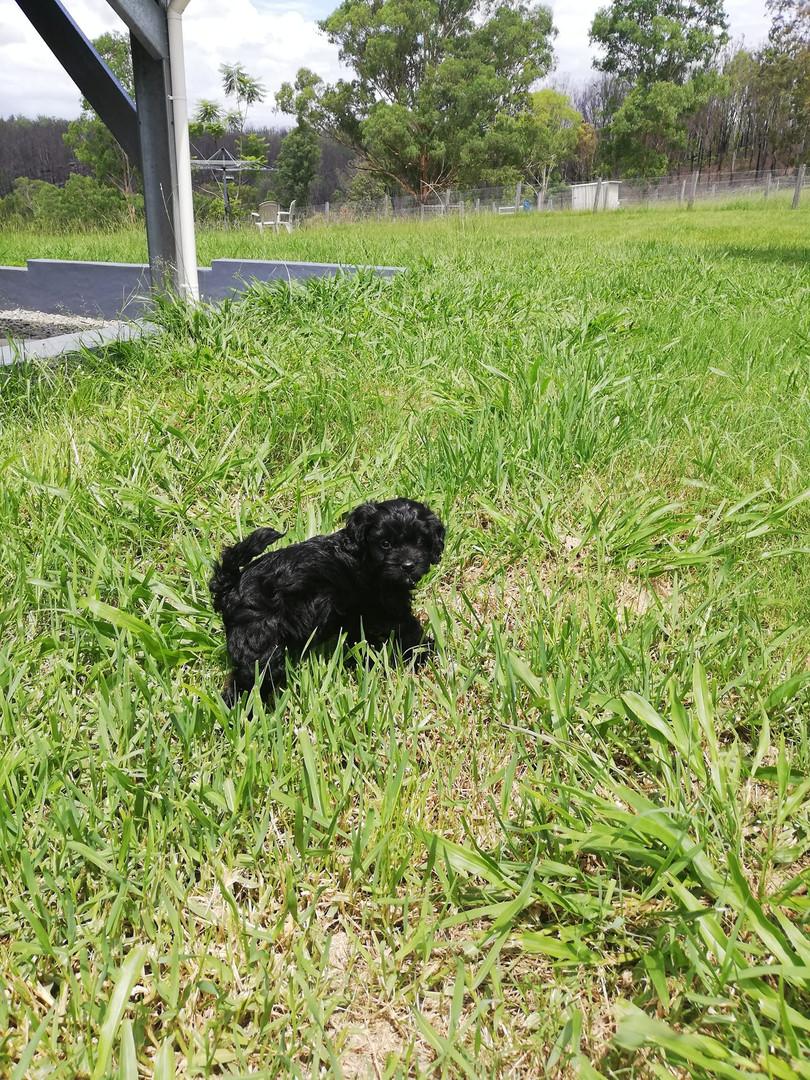 pup outside.jpg