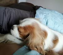 Gemma on bed.jpg