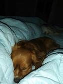 Maple sleeping.jpg