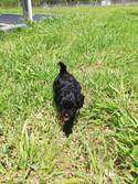 black pup outside.jpg